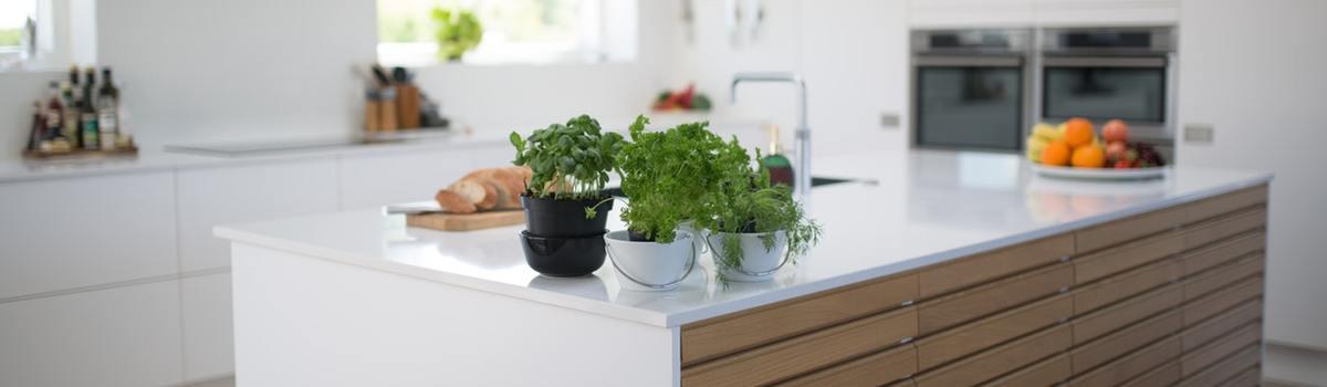Large green leafed plants on kitchen island 1358900