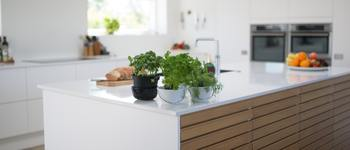 Normal green leafed plants on kitchen island 1358900